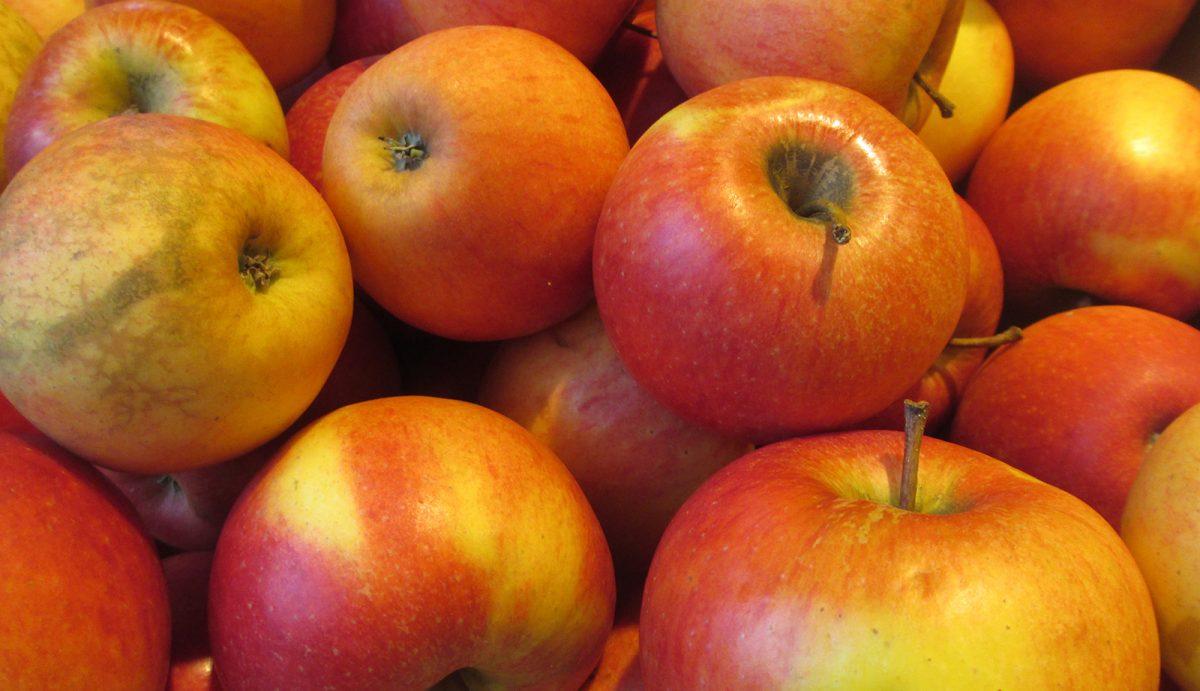 Bio-Verbraucher.de, netz.bio, Info-Brief, Verbrauchermeinung, Bio-Äpfel müssen keine perfekte Oberfläche haben
