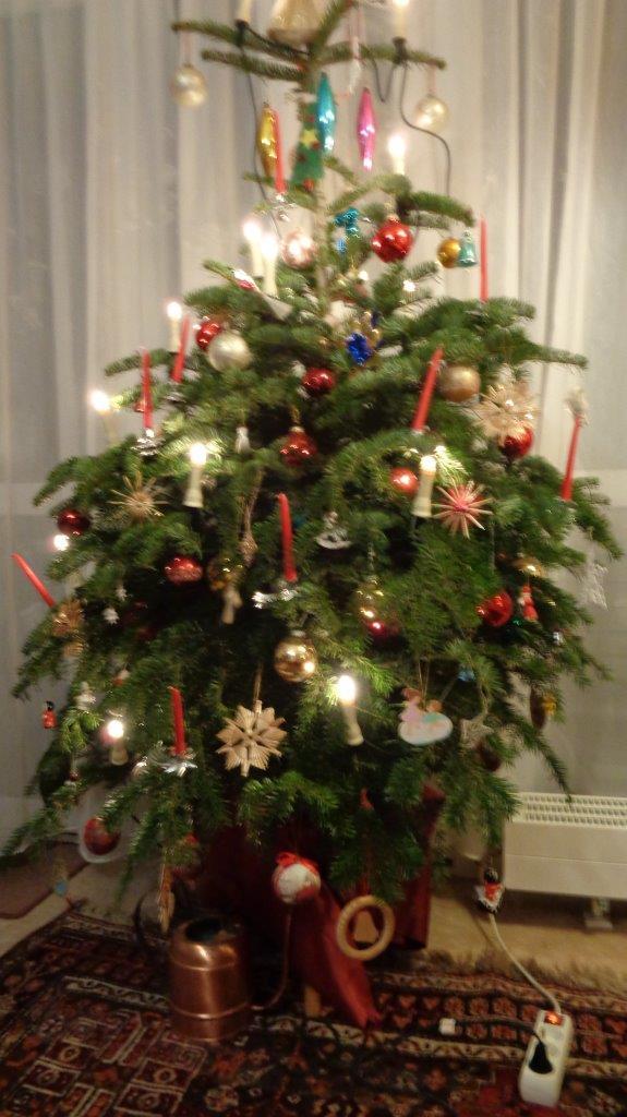 Unser Weihnachtsbaum ist bio