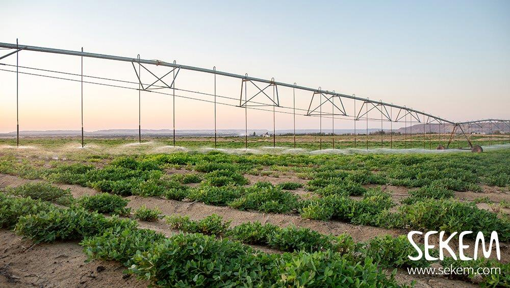 Greening the Desert – das SEKEM-Wahat-Projekt