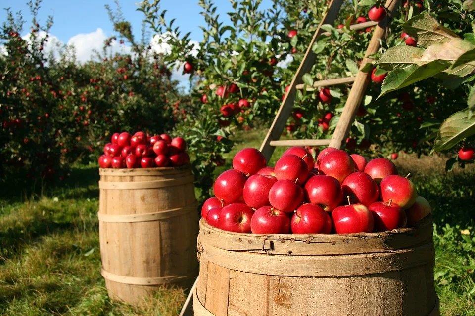 Apfelangebot – was Kunden wirklich wollen